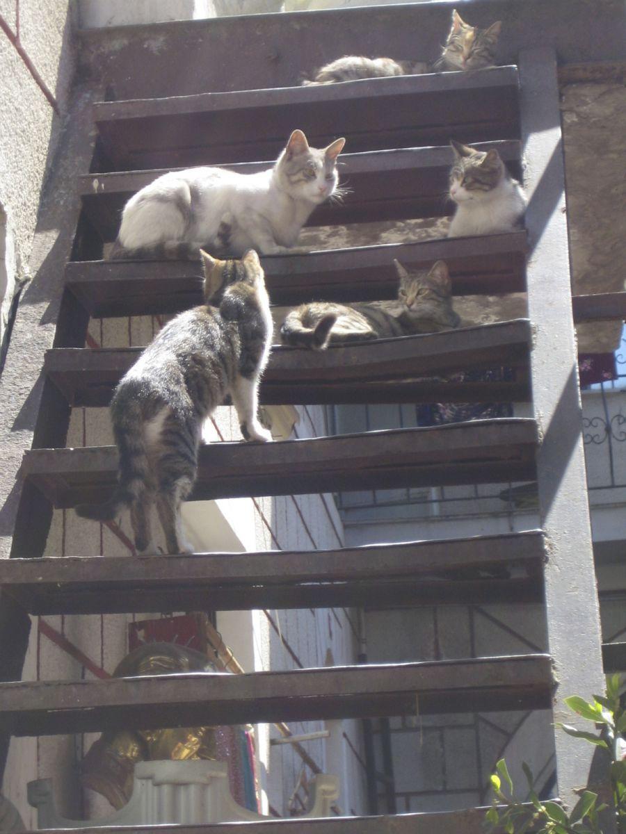 beißt sich die katze