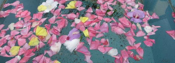 Blüttenblätter in Wasserbecken